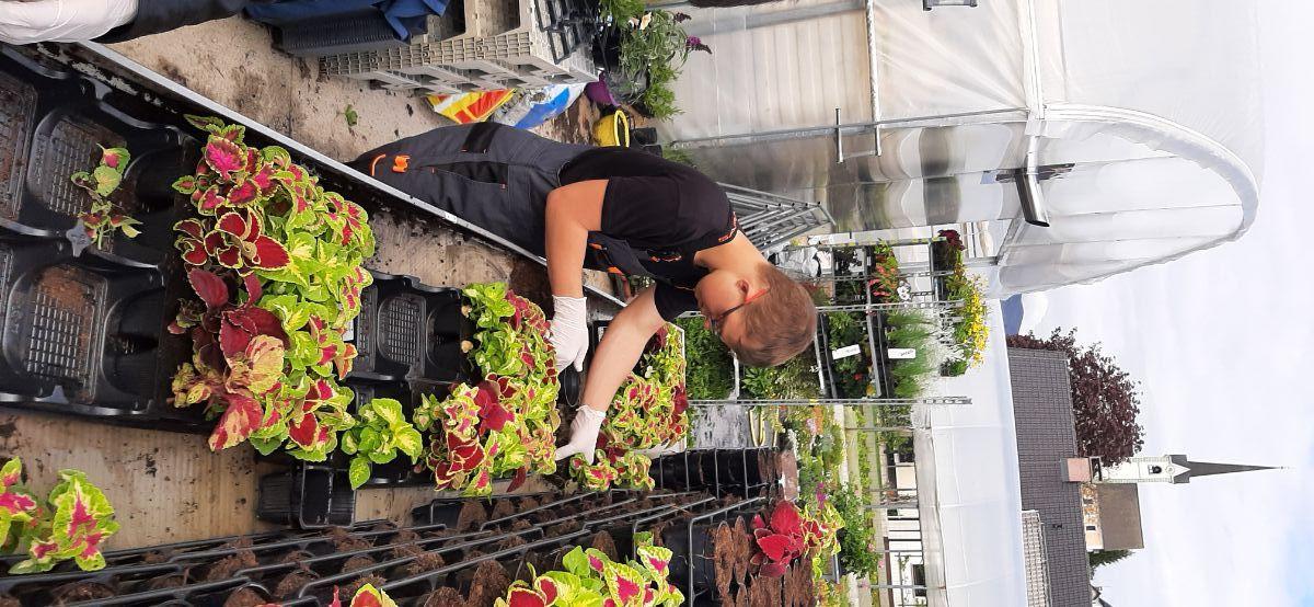vrtnarija-gomzi-5